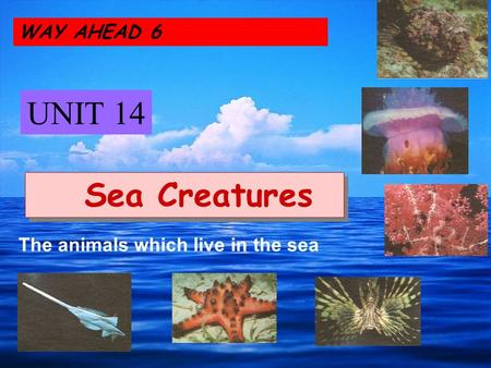 WAY AHEAD 6 UNIT 14 Sea Creatures The animals which live in the sea.