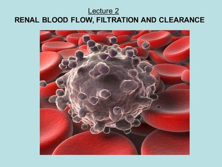 Lecture 2 RENAL BLOOD FLOW, FILTRATION AND CLEARANCE Macrophage white blood cell and red blood cells.