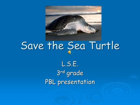 Save the Sea Turtle L.S.E. 3 rd grade PBL presentation.