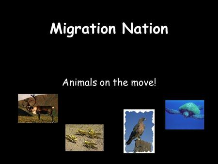 Migration Nation Animals on the move!.