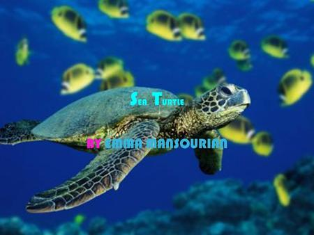 S EA T URTLE BY EMMA MANSOURIAN. I NTRODUCTION o NAME OF ANIMAL : SEA TURTLE o Physical features- what it looks like: it has four legs, smooth skinned.