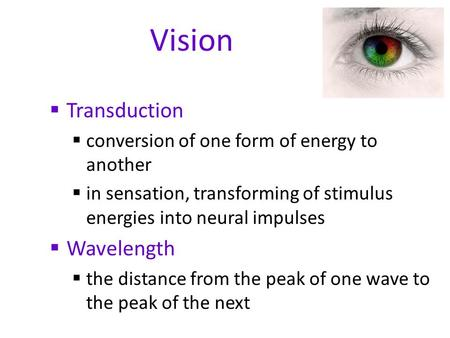Vision  Transduction  conversion of one form of energy to another  in sensation, transforming of stimulus energies into neural impulses  Wavelength.