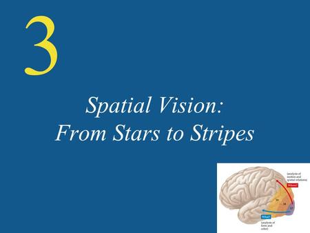Spatial Vision: From Stars to Stripes 3. Figure 3.1 Cortical visual pathways.