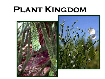 Plant Kingdom. Plant Classification Plant Kingdom Bryophytes Tracheophytes Seedless Seeds Gymnosperms Angiosperms Monocots Dicots.