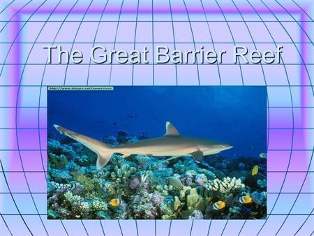The Great Barrier Reef. whales Is found in Queensland. Is found in Queensland. Dwarf minke whales visit the reef every year in June and July. Dwarf minke.