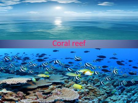 Coral reef. Where coral reef are located ? Coral reefs are located in the the Eastern coast of Africa, the Southern coast of India, the coasts of Australia,
