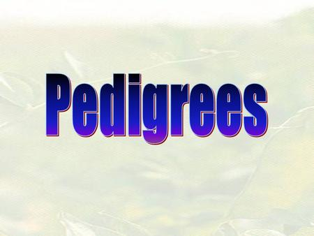 Pedigrees Show how traits are passed on in a family = Female = Male See purple booklet after page 16 OR blue page 57 for pedigree symbols (these are on.