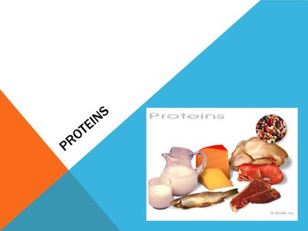 PROTEINS. PROTEIN The main function of protein is to build and repair tissues (muscle tissue)