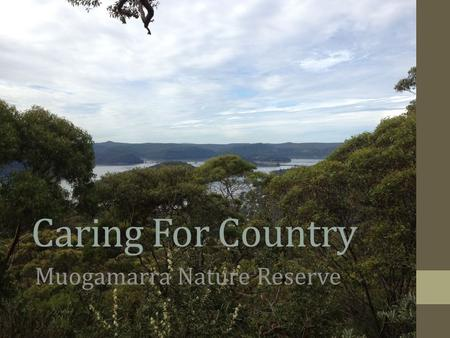 Caring For Country Muogamarra Nature Reserve. Inspirations from Caring For Country course. 1.Created an online Indigenous Perspectives resource for CCPS.