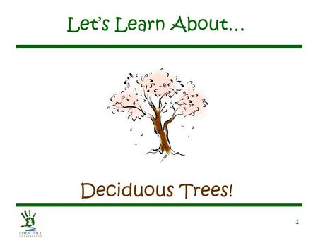 1 Let's Learn About… Deciduous Trees!. 2 What Is a Deciduous Tree? Has broad, flat leaves –Leaves are green in summer –Leaves turn colors in the fall.