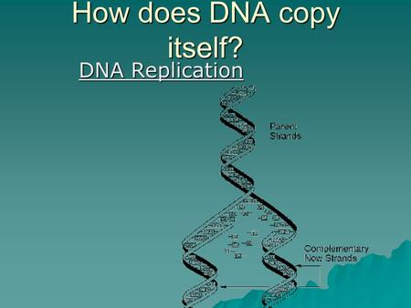 "How does DNA copy itself? DNA Replication.  The ""parent"" strands act as templates for replication  Each receives a new, complementary strand."