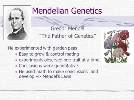 "Mendelian Genetics Gregor Mendel ""The Father of Genetics"" He experimented with garden peas Easy to grow & control mating experiments observed one trait."