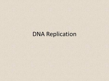 DNA Replication. DNA replication depends on specific base pairing – DNA replication Starts with the separation of DNA strands – Then enzymes use each.