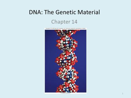 DNA: The Genetic Material Chapter 14 1. Discovery of DNA Griffith Avery, MacLeod, McCarthy Hershey and Chase 2.