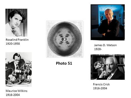 Photo 51 Rosalind Franklin 1920-1958 Maurice Wilkins 1916-2004 James D. Watson 1928- Francis Crick 1916-2004.