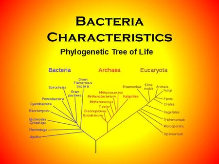 Bacteria Characteristics. Prokaryote = All Bacteria A living Organism A single celled organism No nucleus No organelles – DNA, cell membrane, cell wall,