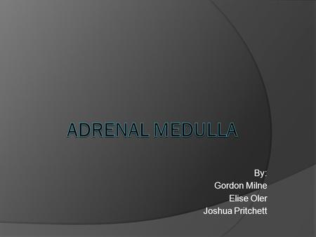 By: Gordon Milne Elise Oler Joshua Pritchett. Where is the Adrenal Medulla?  The Adrenal Medulla is located inside the Adrenal Cortex (atop the kidneys).