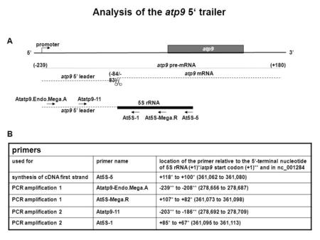 Analysis of the atp9 5' trailer A B At5S-5 Atatp9.Endo.Mega.A atp9 At5S-Mega.R (-239) (-84/- 83) (+180) 5S rRNA 5' 3' atp9 mRNA atp9 pre-mRNA atp9 5' leader.