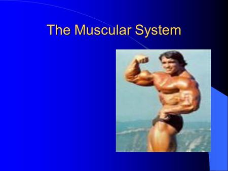 The Muscular System. Functions of the Muscular System The muscles in your body are always at work Muscle make you breath, make your heart beat, and help.