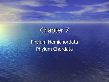 Chapter 7 Phylum Hemichordata Phylum Chordata. Phylum Hemichordata Characteristics: Characteristics: –Rare group, but these worms seem to span a gap between.