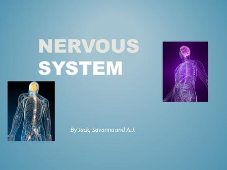 NERVOUS SYSTEM By Jack, Savanna and A.J.. 1)What is the role that your body system plays in the human body 2)What are the major organs that make up your.