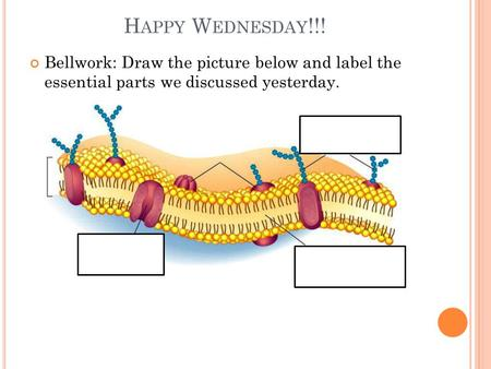 H APPY W EDNESDAY !!! Bellwork: Draw the picture below and label the essential parts we discussed yesterday.