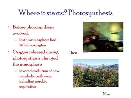 Where it starts:? Photosynthesis Before photosynthesis evolved, –Earth's atmosphere had little free oxygen Oxygen released during photosynthesis changed.