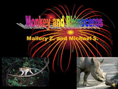 Mallory Z. and Michael S. Mammals There are five different groups of animals with vertebrates. Reptiles Fish Amphibians Birds.