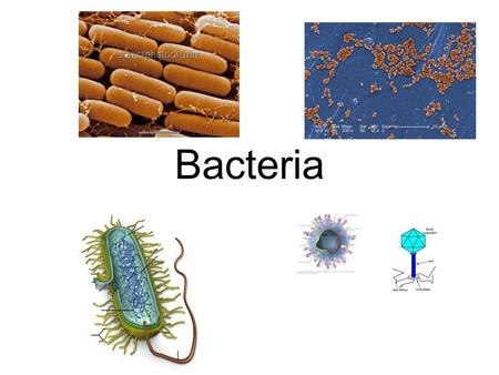 Bacteria. Prokaryotes Single-celled organisms that lack a nucleus, usually very small Also known as bacteria.