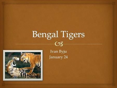 Ivan Byju January 24   The name of my animal is the Bengal Tiger. The Name Of My Animal.