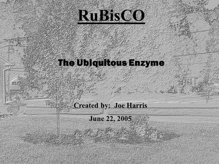 RuBisCO The Ubiquitous Enzyme Created by: Joe Harris June 22, 2005.