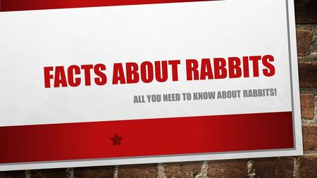 FACTS ABOUT RABBITS ALL YOU NEED TO KNOW ABOUT RABBITS!