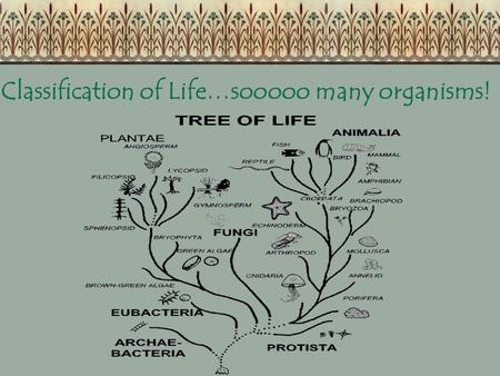Classification of Life…sooooo many organisms! Why Classify? So we can understand other organisms better So we know the needs of living things So we can.