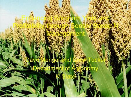 Enhancing Sorghum Yield and Profitability through Sensor Based N Management Dave Mengel and Drew Tucker Department of Agronomy K-State.