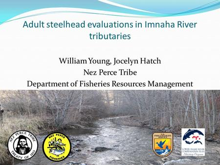 Adult steelhead evaluations in Imnaha River tributaries William Young, Jocelyn Hatch Nez Perce Tribe Department of Fisheries Resources Management.