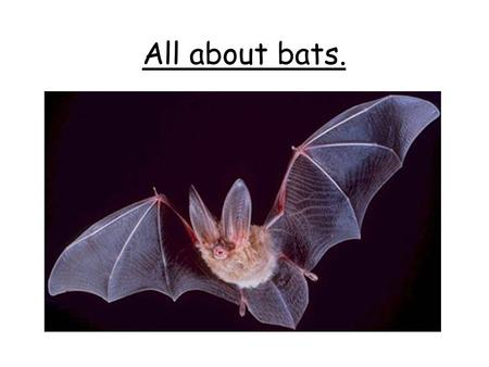 All about bats.. What types of bats do we have in the UK? In the UK, we are lucky enough to have 17 different types of bats. They range from the tiny.