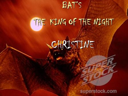 BAT'S THE KING OF THE NIGHT CHRISTINE. Basic information: These creatures are probably the most misunderstood Creatures in the world. They come out while.
