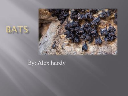By: Alex hardy. My name is Alex and your going to learn about bats!!!!!!!!!!