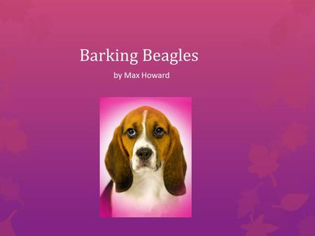 Barking Beagles by Max Howard What are beagles?  Beagles are a breed of dog that loves to play and have fun!  They are fast cute and playful.  Beagles.