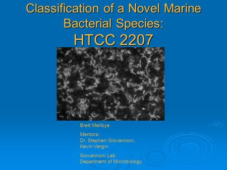 Classification of a Novel Marine Bacterial Species: HTCC 2207 Brett Mellbye Mentors: Dr. Stephen Giovannoni, Kevin Vergin Giovannoni Lab, Department of.