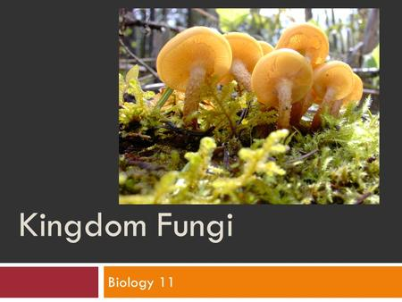 Kingdom Fungi Biology 11. Kingdoms Review: What is a fungus?  A eukaryotic, multicellular, heterotrophic organism that does not have chlorophyll. 