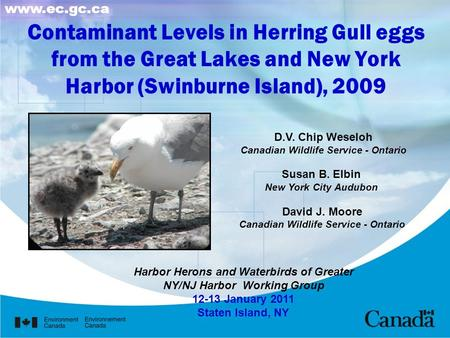 Contaminant Levels in Herring Gull eggs from the Great Lakes and New York Harbor (Swinburne Island), 2009 D.V. Chip Weseloh Canadian Wildlife Service -