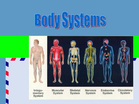 ANATOMY – study of the parts of the body PHYSIOLOGY – function of the body ANATOMICAL POSITION – standing erect with face forward, arms at the side, palms.