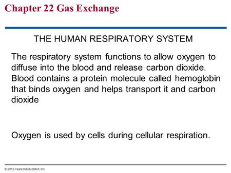 Chapter 22 Gas Exchange THE HUMAN RESPIRATORY SYSTEM The respiratory system functions to allow oxygen to diffuse into the blood and release carbon dioxide.