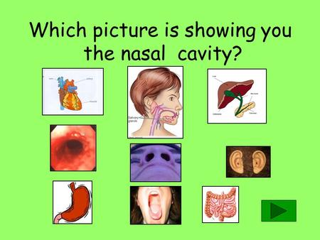 Which picture is showing you the nasal cavity? The....................are the tubes that carry the blood. BLOOD VESSELS TRACHEAS.