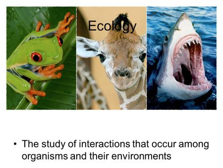 Ecology The study of interactions that occur among organisms and their environments.
