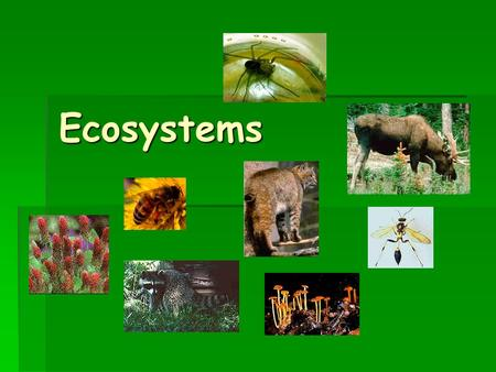 Ecosystems. What is an Ecosystem?  An ecosystem is a plant and animal community made up of living and nonliving things that interact with each other.
