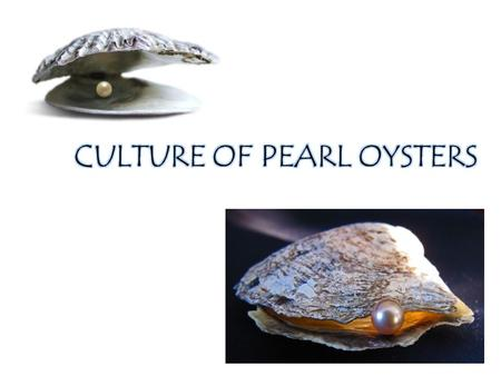 Pearls - oldest of gems Used - ornamental, have medicinal value, in cosmetics and tooth pastes The species of pearl oysters found in India are Pinctada.