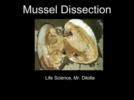 Mussel Dissection Life Science, Mr. Ditolla. Mollusks Many mollusks such as oysters, clams, and snails have hard outer shells. Other mollusks such as.