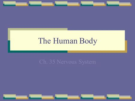 The Human Body Ch. 35 Nervous System. Organization of the Body The levels of organization in a multicellular organism include cells, tissues, organs,